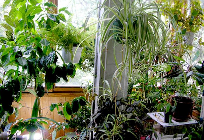 Комнатных растений может нести в