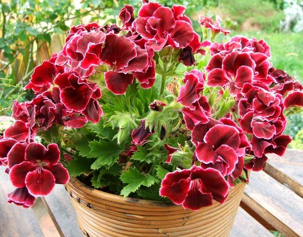 Комнатные растения опасные для