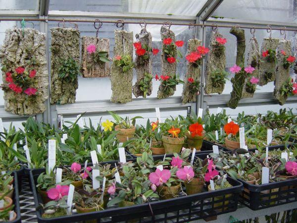 Миниатюрные комнатные растения фото