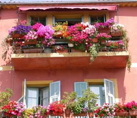 балконное цветоводство фото