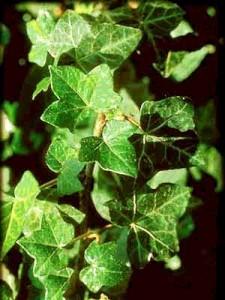 целебные травы против целлюлита фото