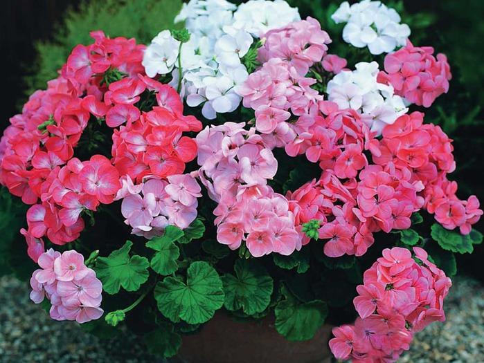 Ароматные комнатные растения фото