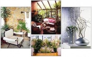 Зачем нужны комнатные растения? фото